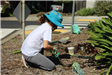 Volunteer planting flowers at Earth Day 2018